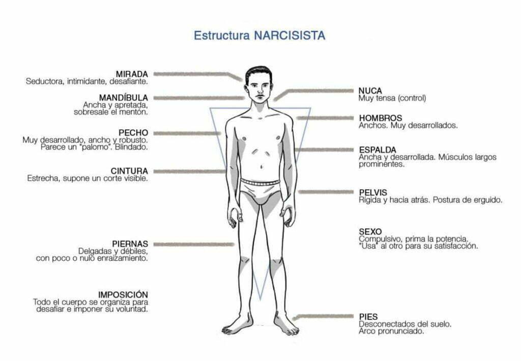 Estructuras Bioenergéticas. Carácter Narcisista