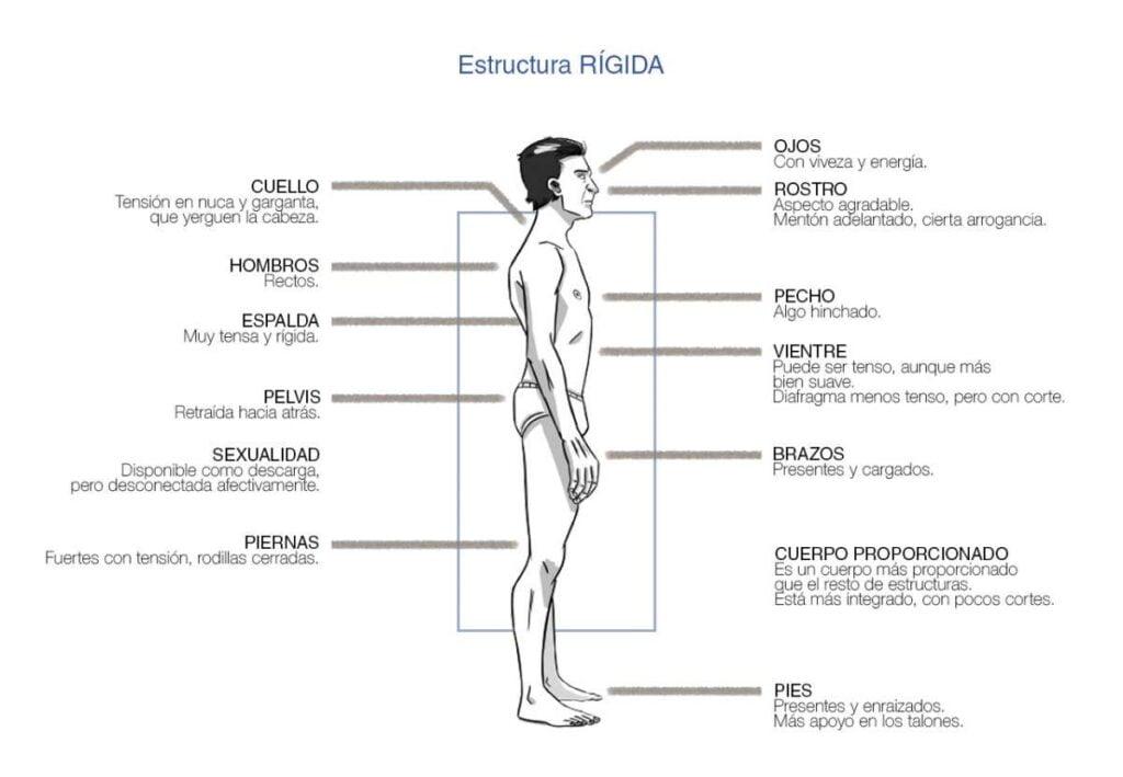 Estructuras Bioenergéticas. Carácter Rígido